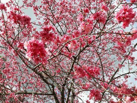 GROOMS GARDENING: Happy Valentine's Day, spring is near
