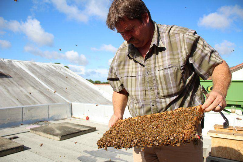 Let it Bee: VSU helps grow bee population