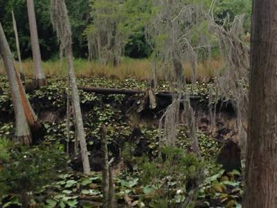 Large sinkhole swallows pond, closes Shiloh Rd.