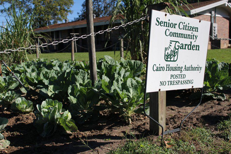 cairo community garden off to growing start - How To Start A Community Garden