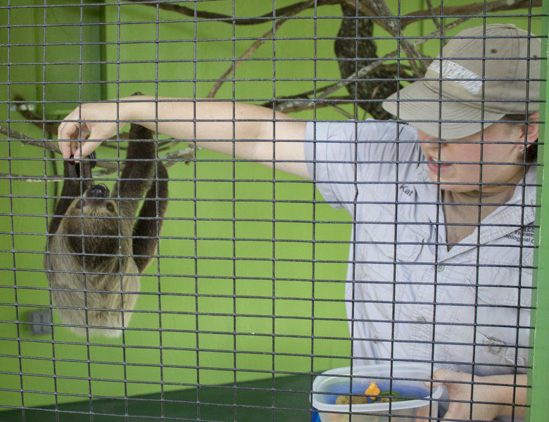 Female sloth comes to Wild Adventures
