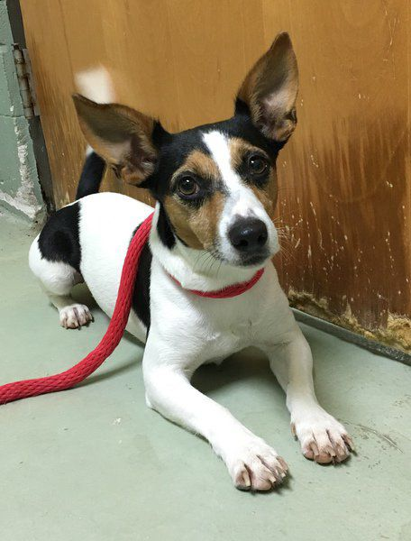 Pets of the Week | Local News | valdostadailytimes com