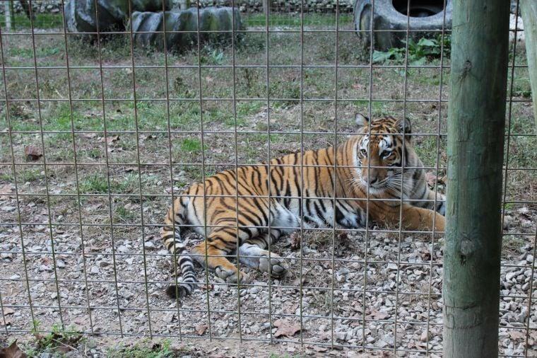 Vinton County creates wild animal response team | News