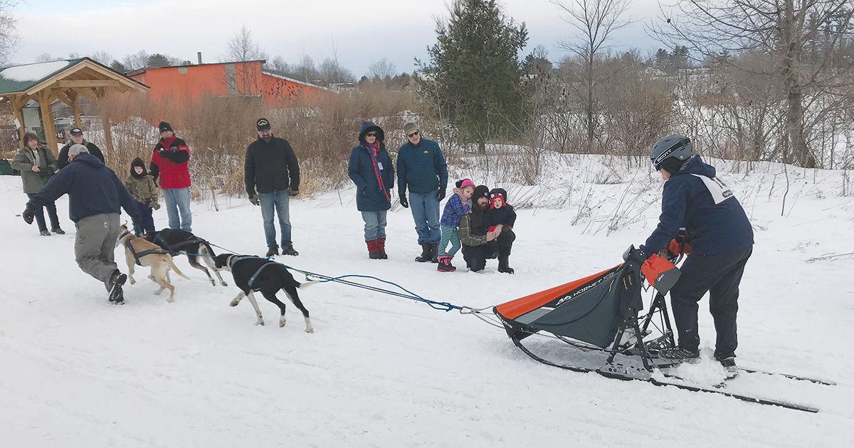 Dog sledding: Three-dog morning