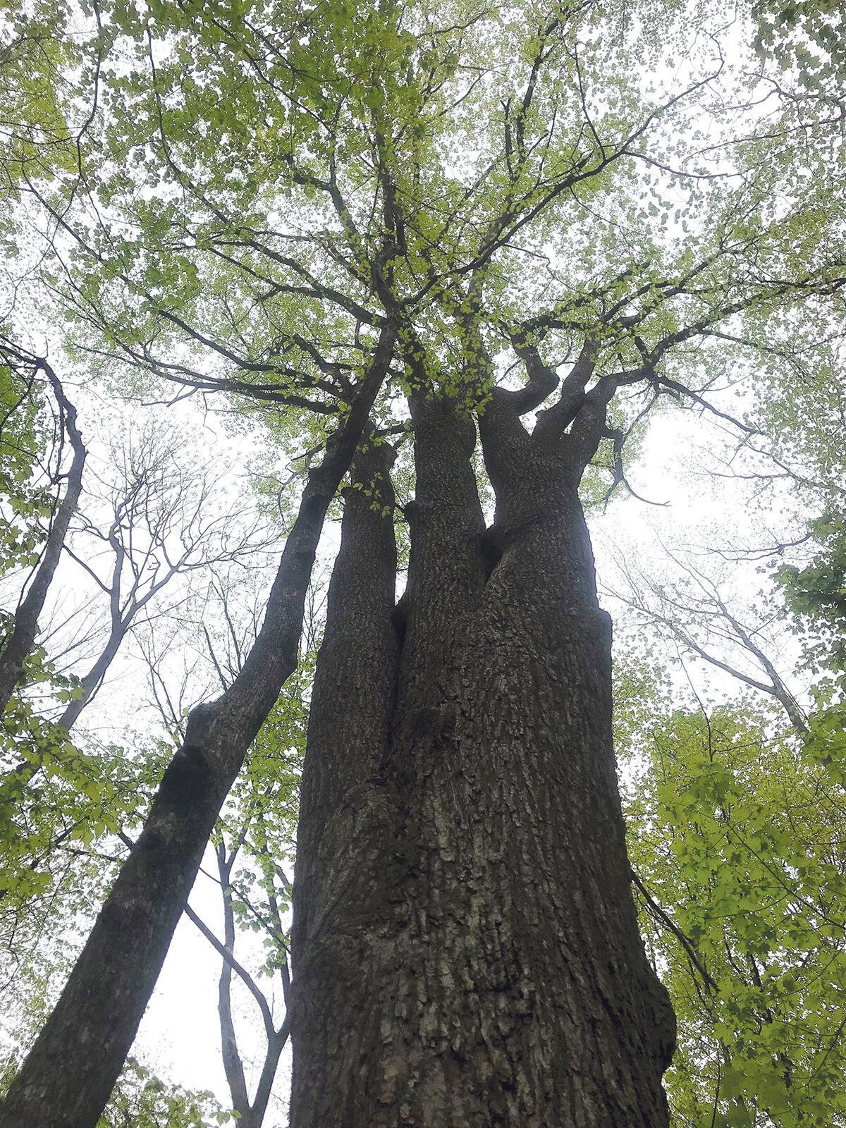 Forest communities create rich, complex legacies