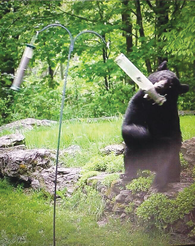 Bear vs. bird feeder