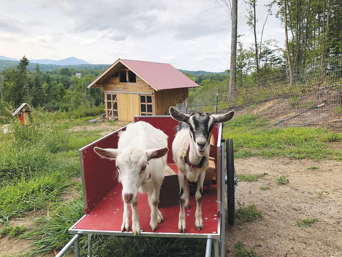 Happy Heart Sanctuary: Goats