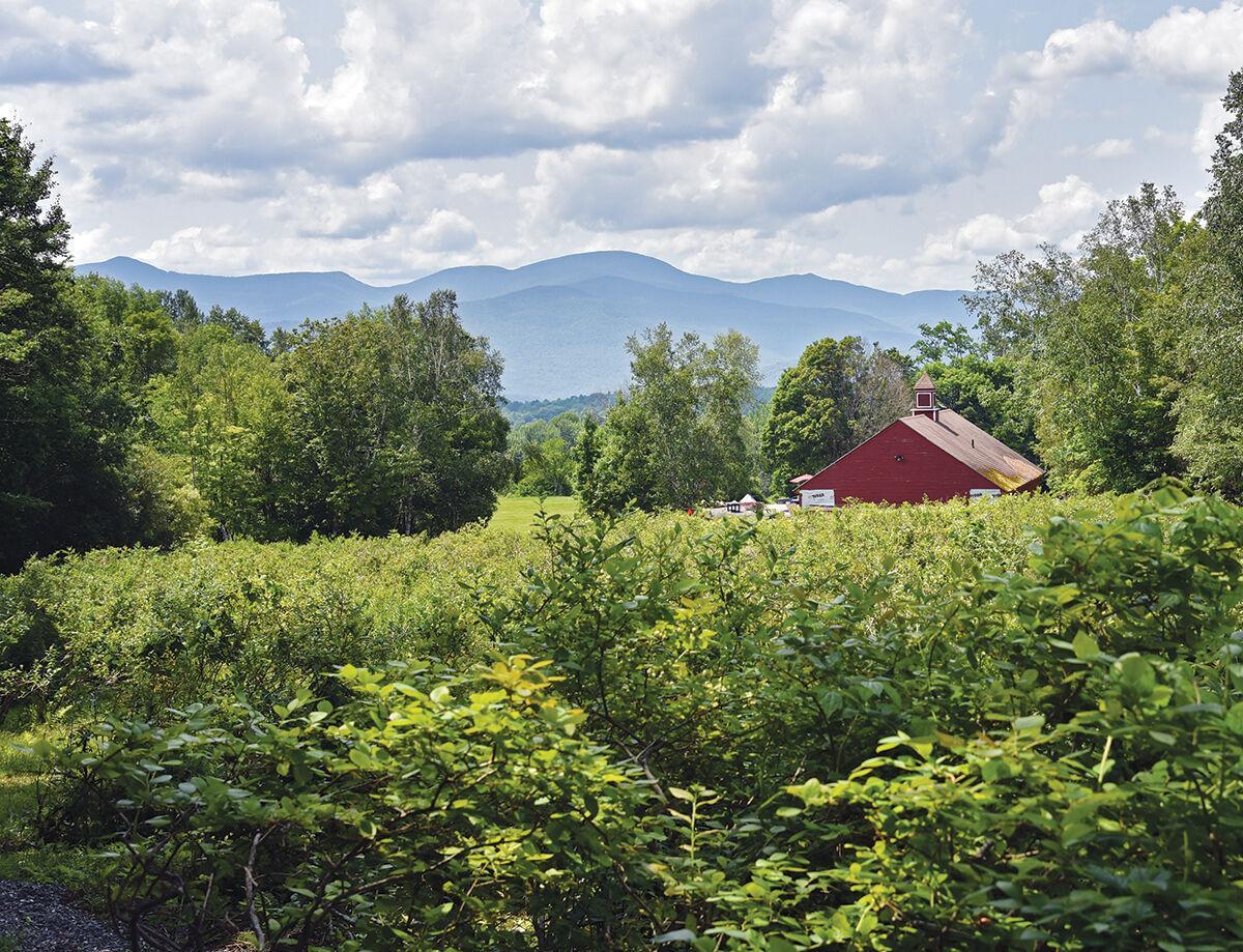 North Hollow Berry Farm