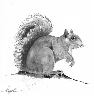 The Outside Story: Gray squirrel