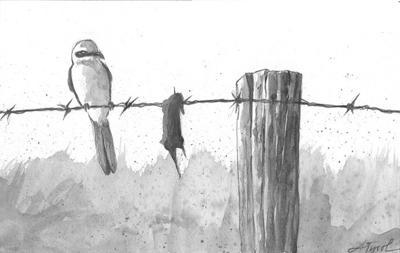 The Northern shrike