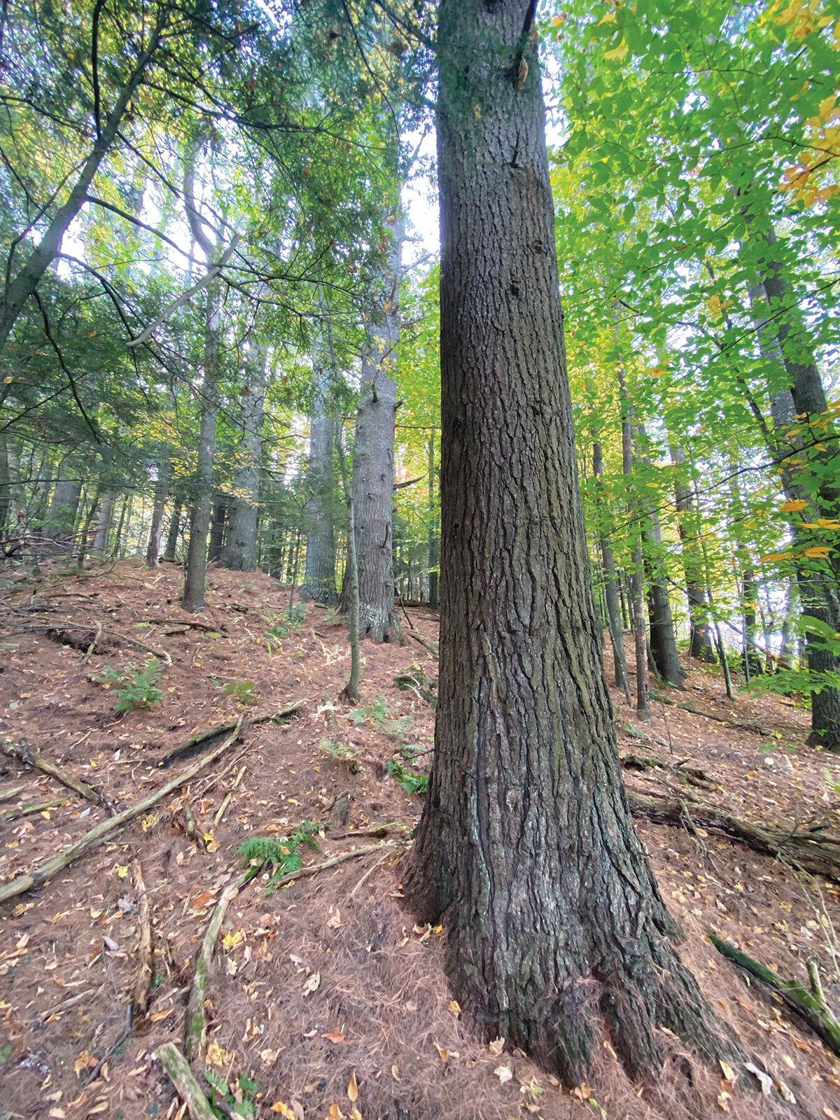 Peter A. Krusch Nature Preserve