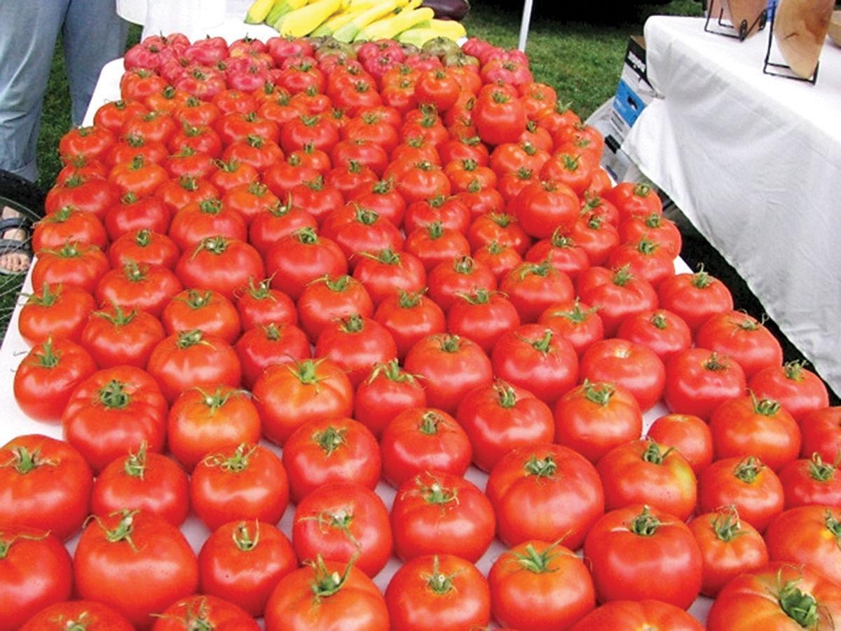 Shelburne Farmers Market tomatoes