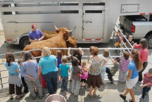 Youngsters learn about Highland cattle
