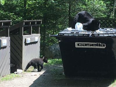 Bears on the prowl