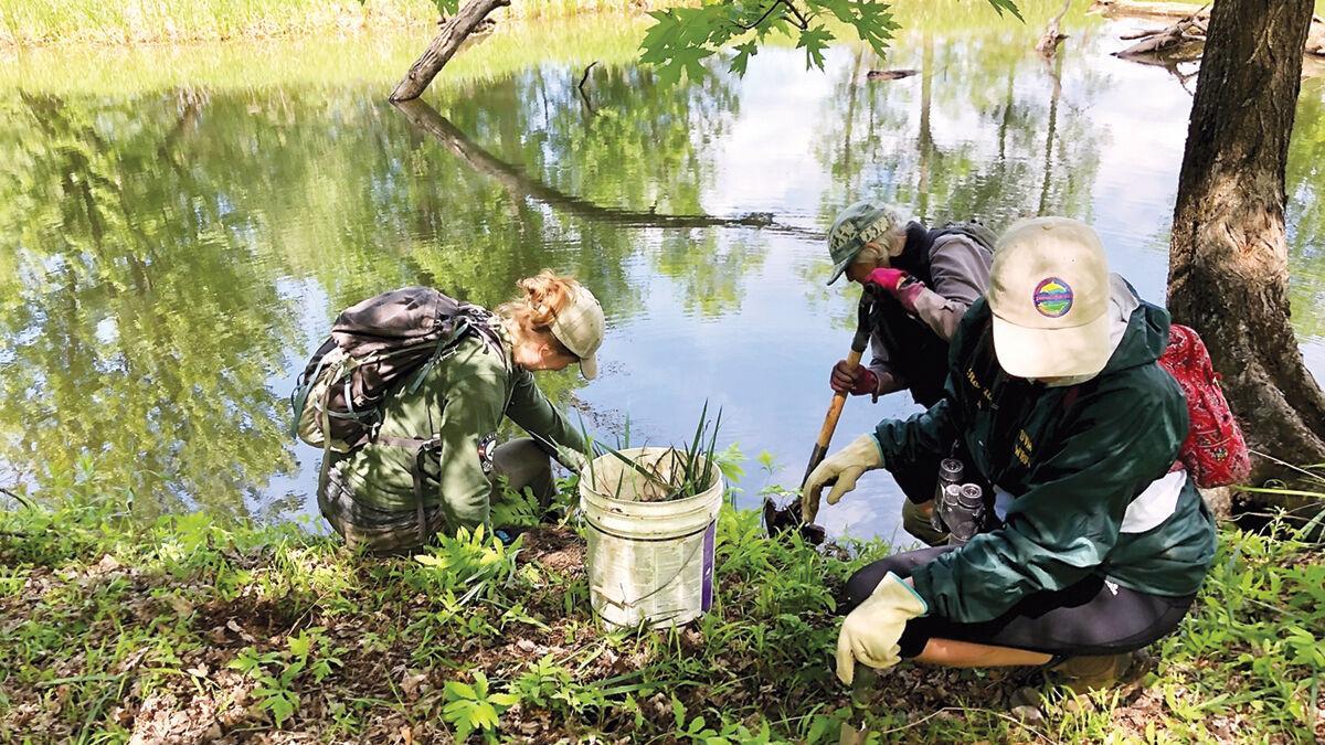Lewis Creek Association wraps up yellow iris control study