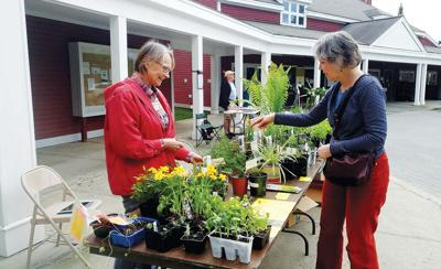 Safe practices for seasonal plant sales