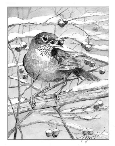 The Outside Story: Winter robin