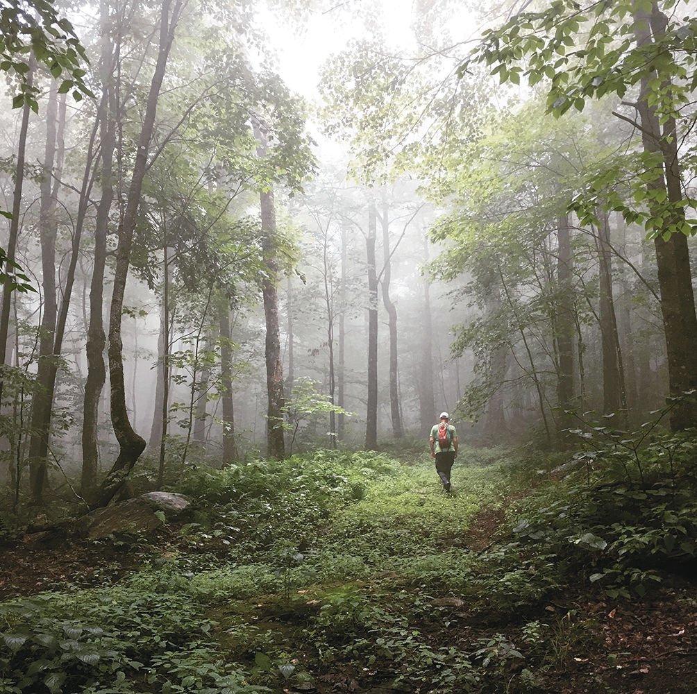 A lush path