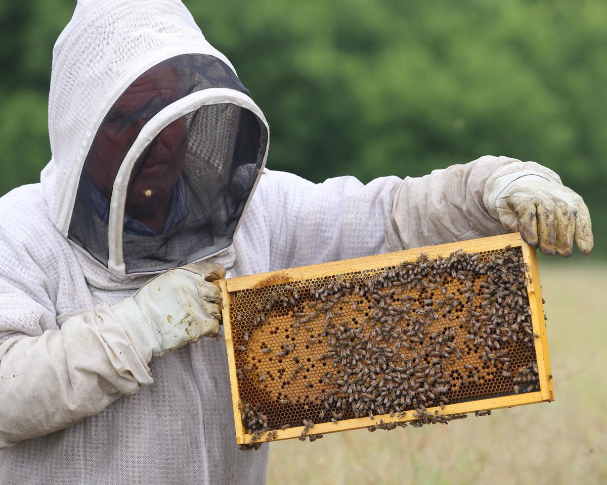 Local Couple Pushes For Change To Waco Beekeeping Ordinance