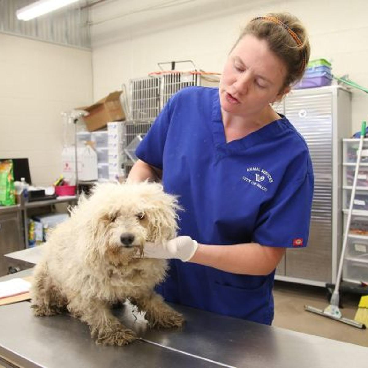 40 Waco shelter dogs euthanized after rabies exposure