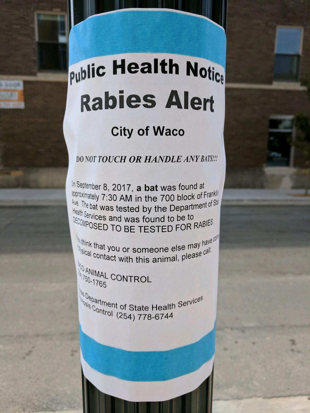 Rabies flyer