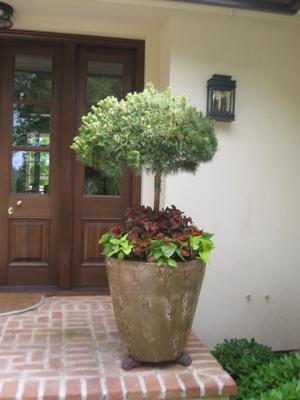 planters 2