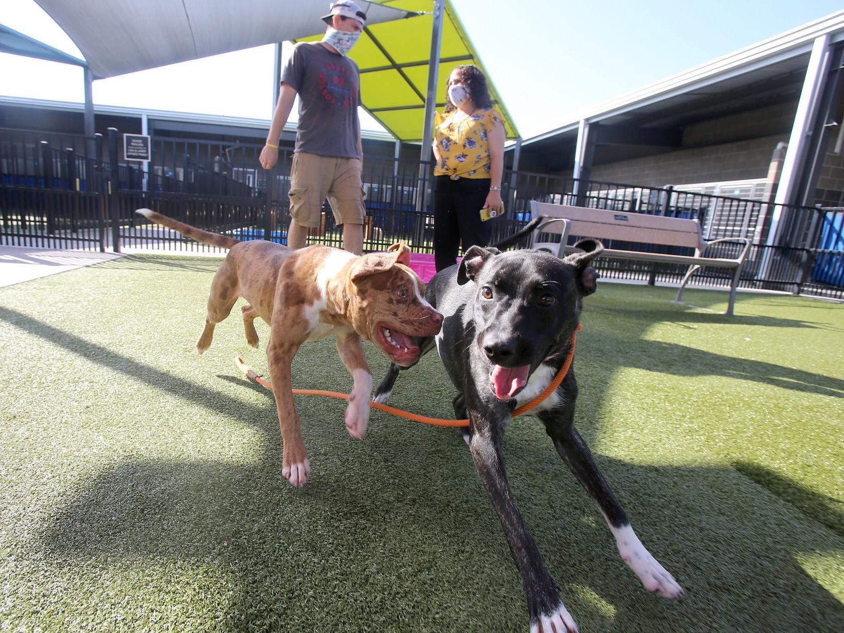 Pilot Group To Fly Waco Shelter Dogs To Idaho For Adoption Local News Wacotrib Com
