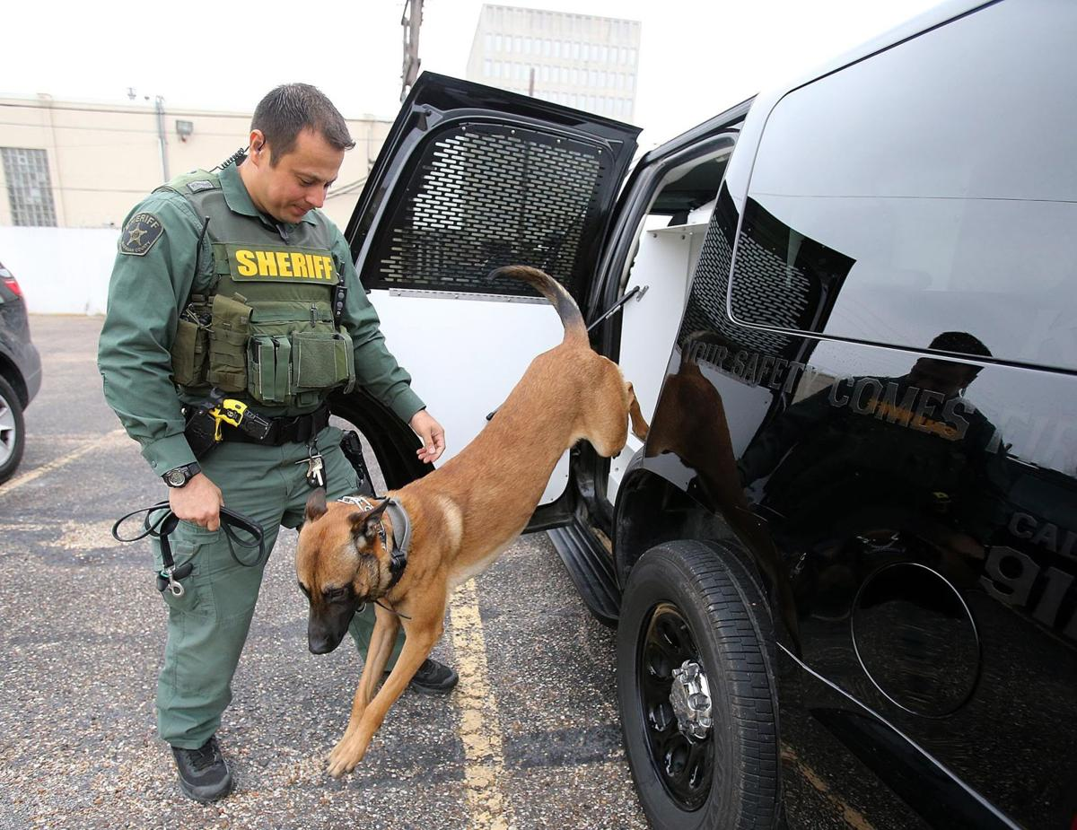 Sheriff's office K-9 handler reprimanded over dog training
