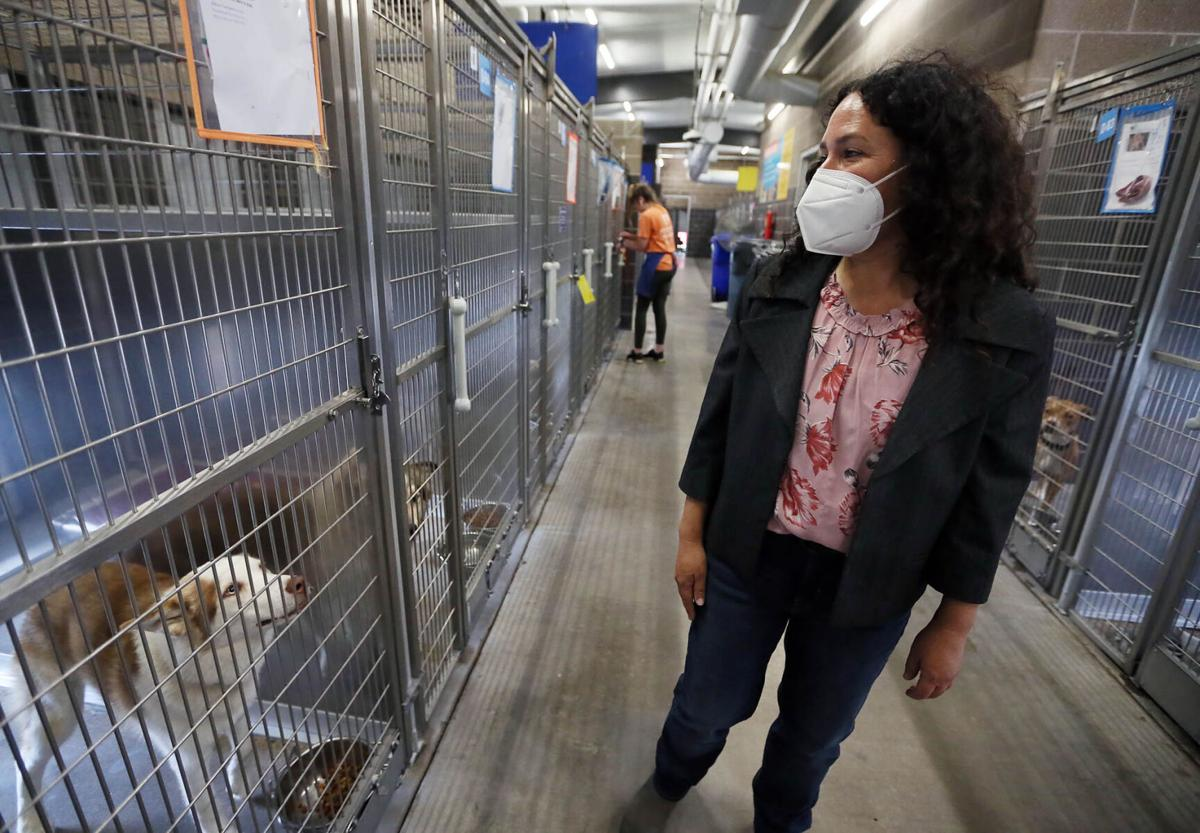 Animal Shelter (copy)