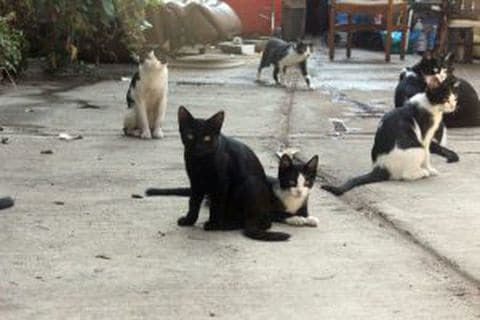 A homeless man died, leaving behind a pack of alley cats. His neighbors came to the rescue.