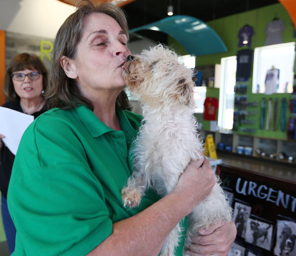 Fireworks Lead To Increase Of Animals At Shelter Government Wacotrib Com