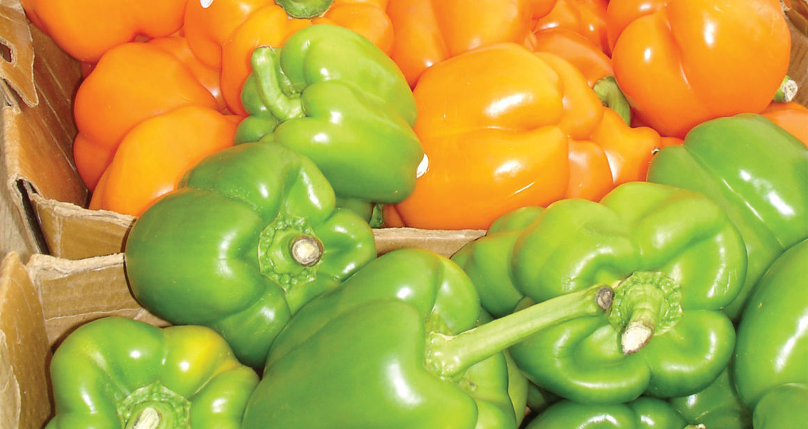 Garden: Growing vegetables in the fall | Waco Today | wacotrib.com