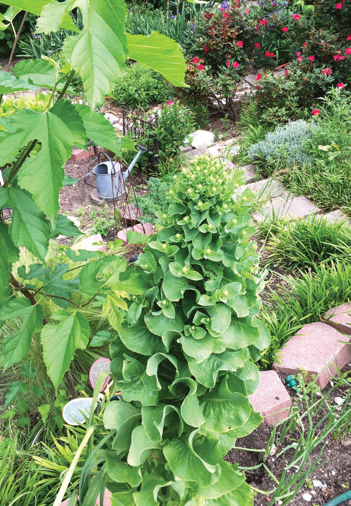 lettuce seeds.jpg