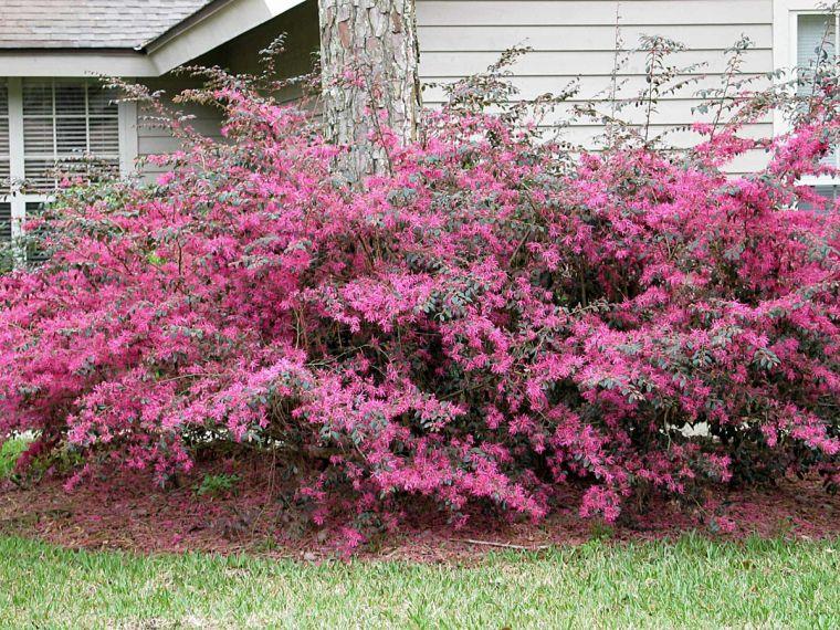 Garden Enhance Yard With Flowering Shrubs Trees Waco