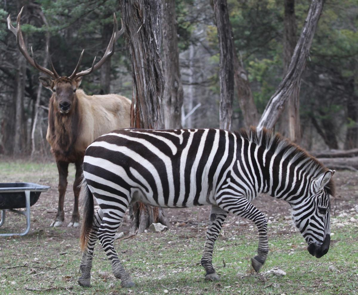 On Safari In Lorena: Karen Keith Has Variety Of Exotic