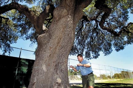 Waco ISD reconsiders athletic field layout to save ancient tree