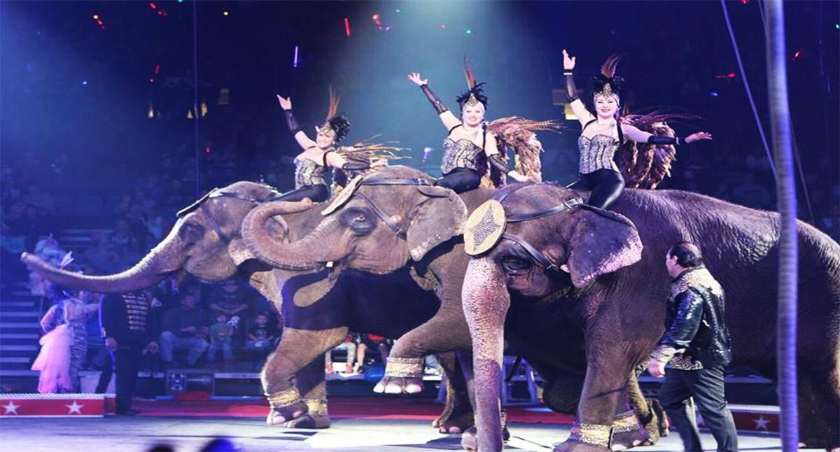 Carden Circus - elephants