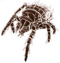 GARDEN: Battling the annoying bugs of summer