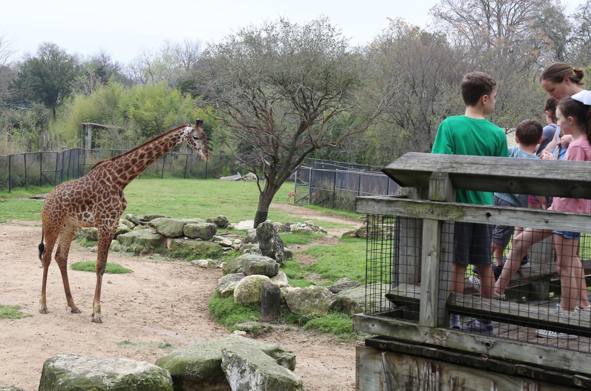 Zoo Spring Break