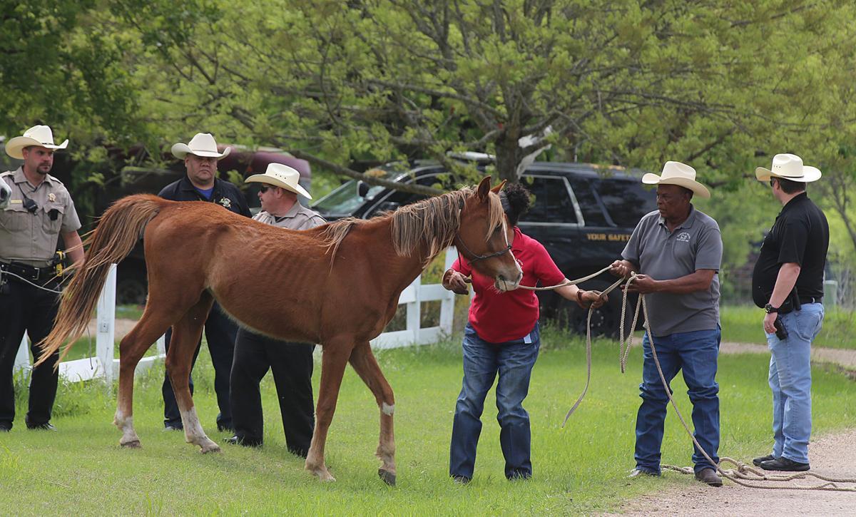 Bruceville-Eddy horses