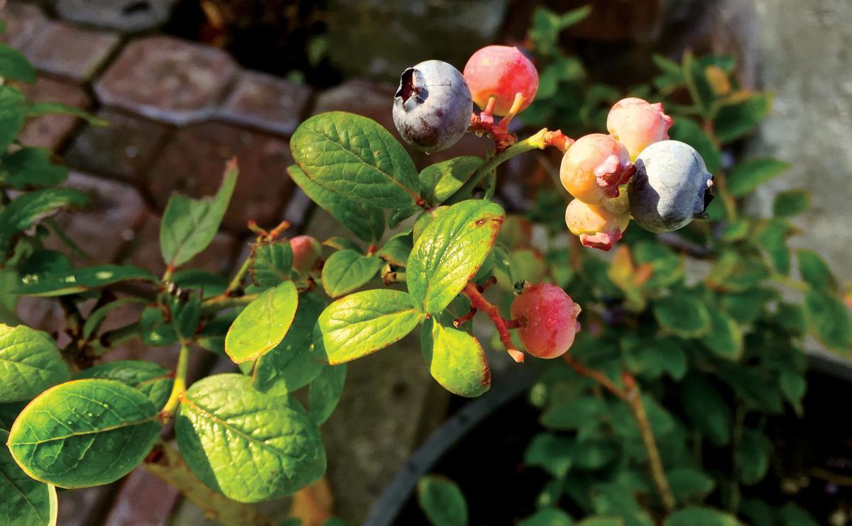 Gardening Scaling Down