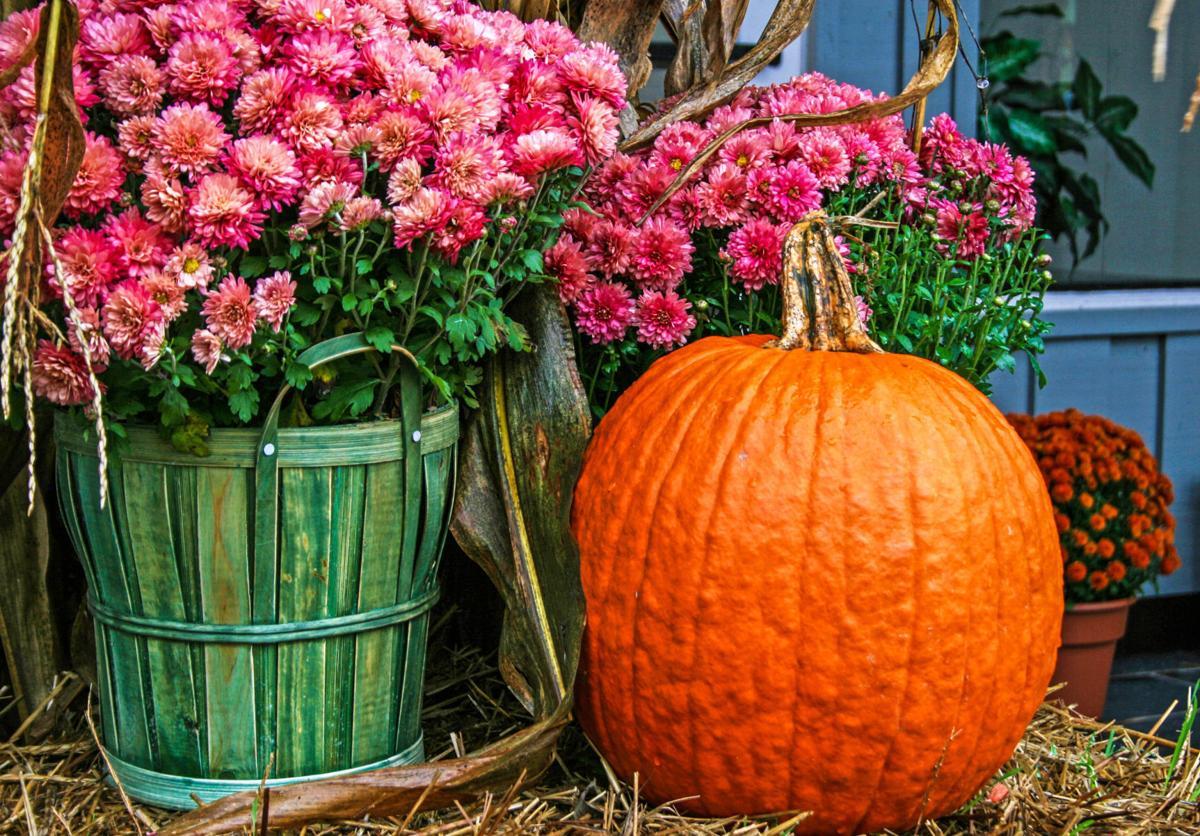 Garden - pumpkin flowers.jpg