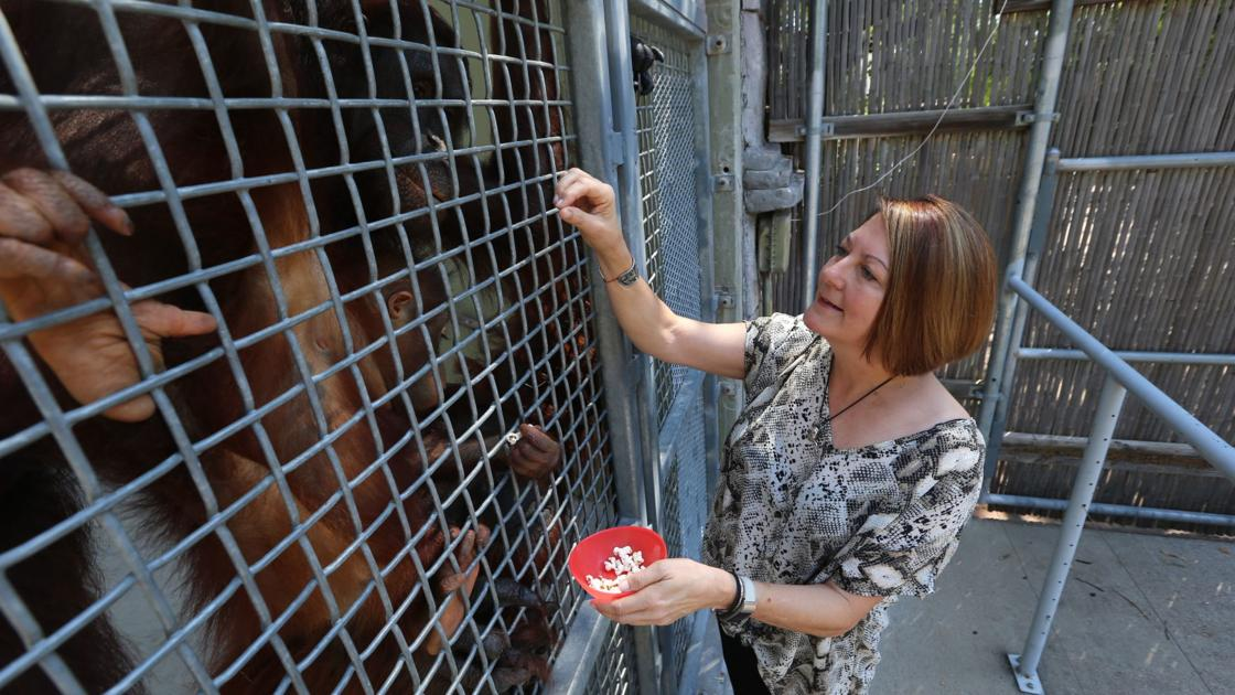 Longtime zoo employee settling in as director of Cameron Park Zoo society