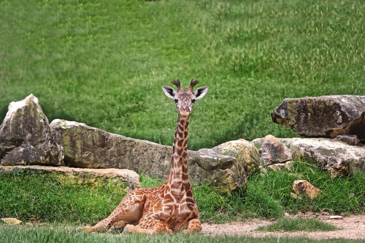 AT Zeke zoo.jpg