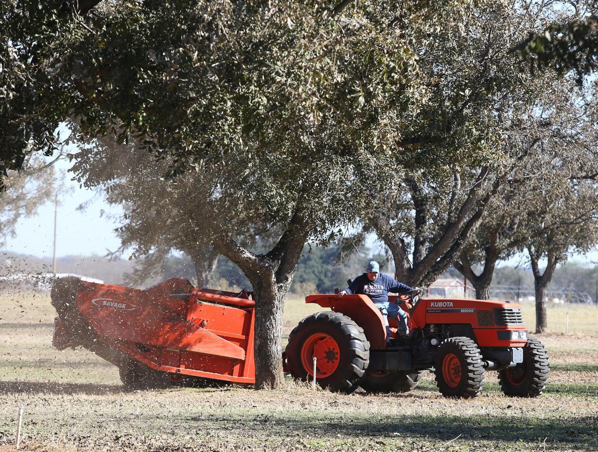 Shell shock: Area pecan farmers slog through in tough year