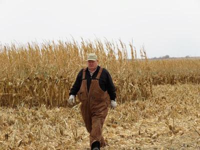 Steve Nelson of Axtell cornfield