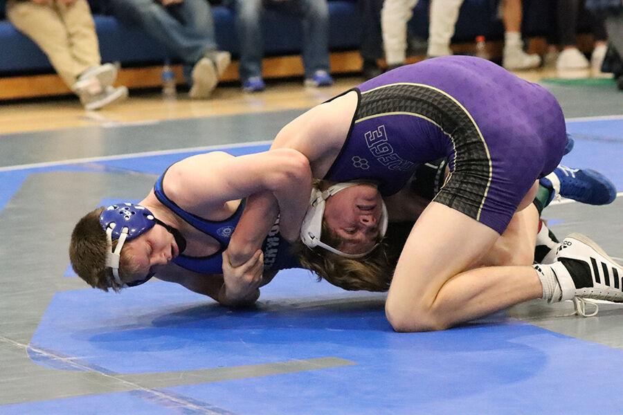 Bluejay wrestling