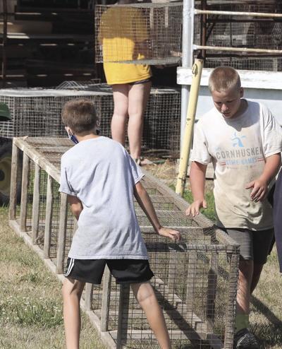 Saunders County Fair