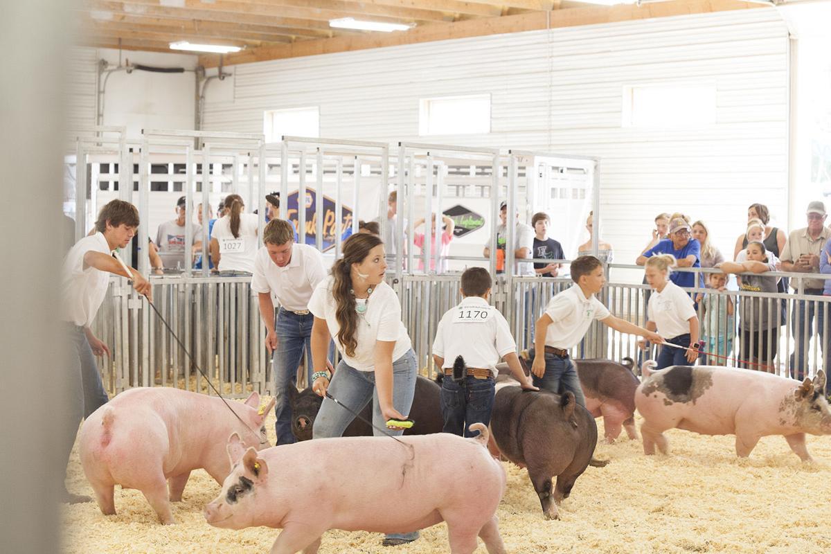 PHOTOS: Scotts Bluff County Fair Market Swine Show 2018