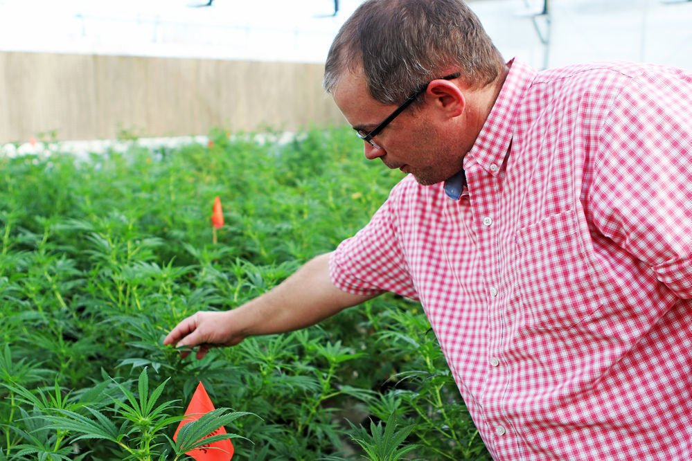 Looking to add hemp to crop lines